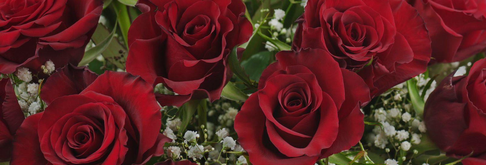 rose-laiuola